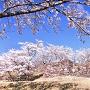 青空の赤木城と桜[提供:西山地区 地域まちづくり協議会]