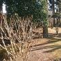浄泉寺の本堂前に残る土塁