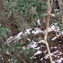勢福寺城 曲輪G(北主郭) 石積