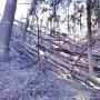 大手口登山道の倒木(2017年12月現在)