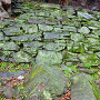 緑色片岩(阿波の青石) の岩盤と石垣①