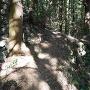 吉野口門跡付近の登り石垣?