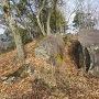 太鼓の丸の岩