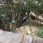 石垣(十朋亭を北側から望む)