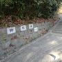 枡形山入り口
