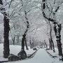 飛鳥山の冬