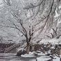 雪と石垣と