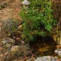 竜宮さんの池