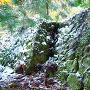 石垣雪化粧