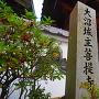 洞樹院・菩提寺石碑