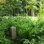 埋もれていた本丸跡の石碑