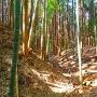 横堀◆西ノ城Ⅱ郭