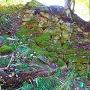 麓部の石垣