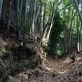 多賀神社北側の外堀底から東方を望む