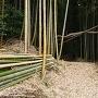 竹林の中に突入