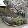 桜と城址風景
