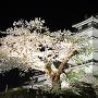夜桜と会津若松城[提供:一般財団法人会津若松観光公社]