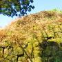 登城口の石垣です