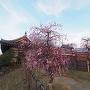 梅と梅林門