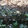 発掘された石垣の石