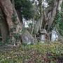 東常胤の墓