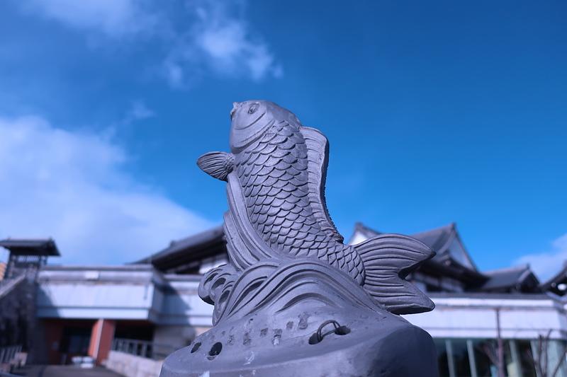 海津市歴史民族資料館の鯉