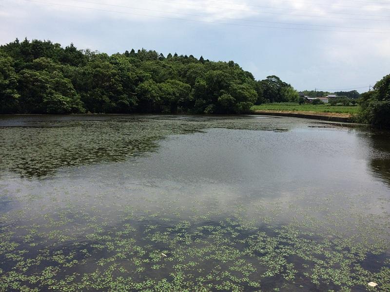 小波城の写真:沼地   攻城団