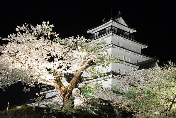 夜桜と会津若松城