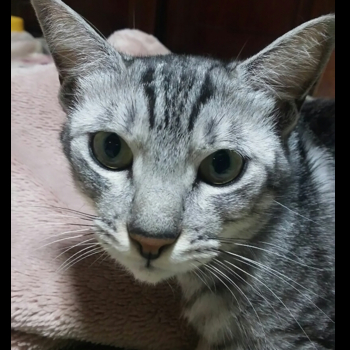 猫セブンさん
